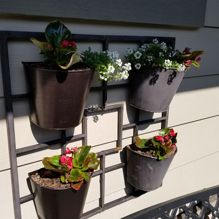 Front porch planter gets Bacopa & Begonias this year